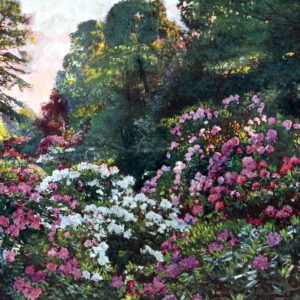 Free vintage landscape of a rhododendron garden in the early 20th-century