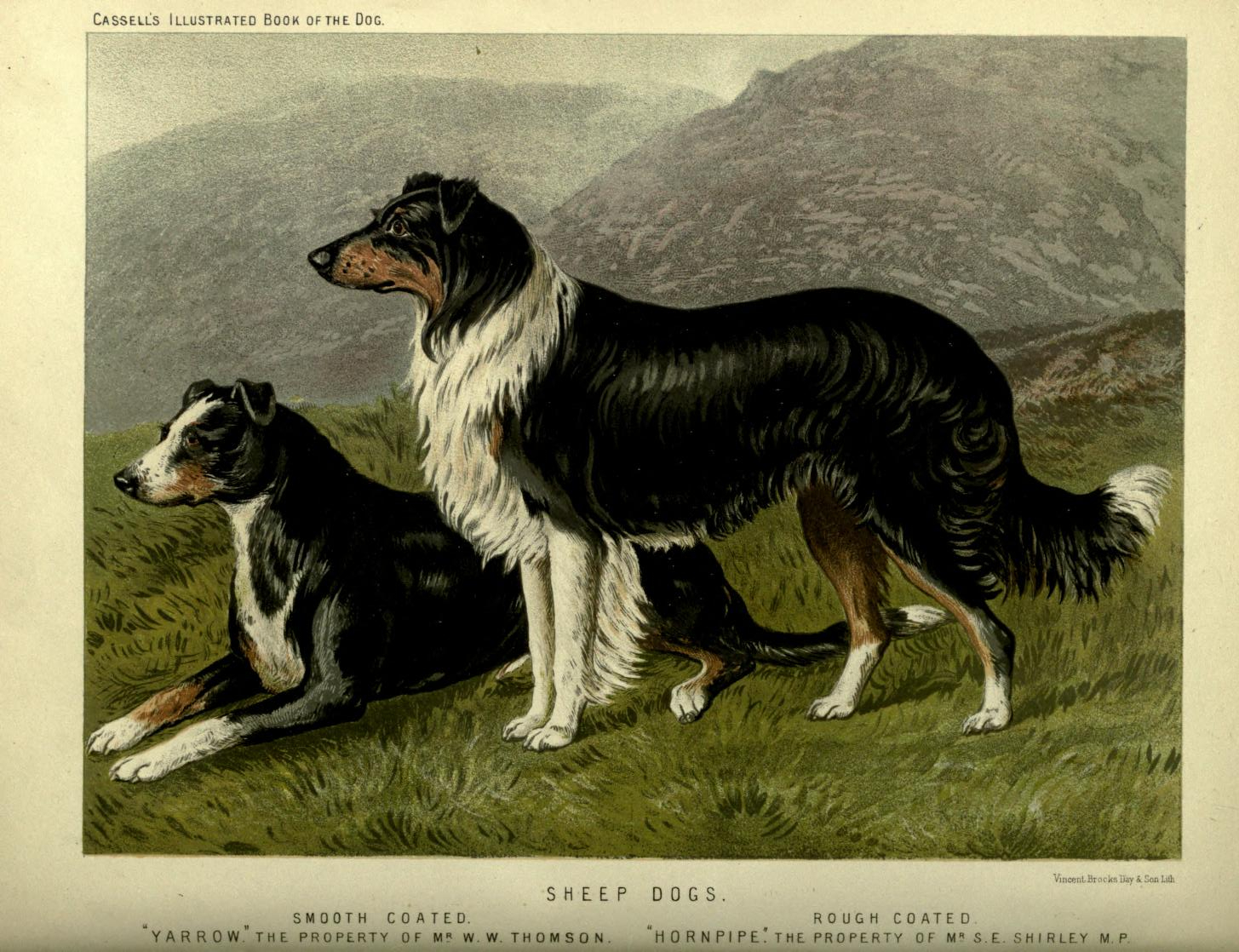 vintage sheep dogs illustration public domain | Free Vintage ...